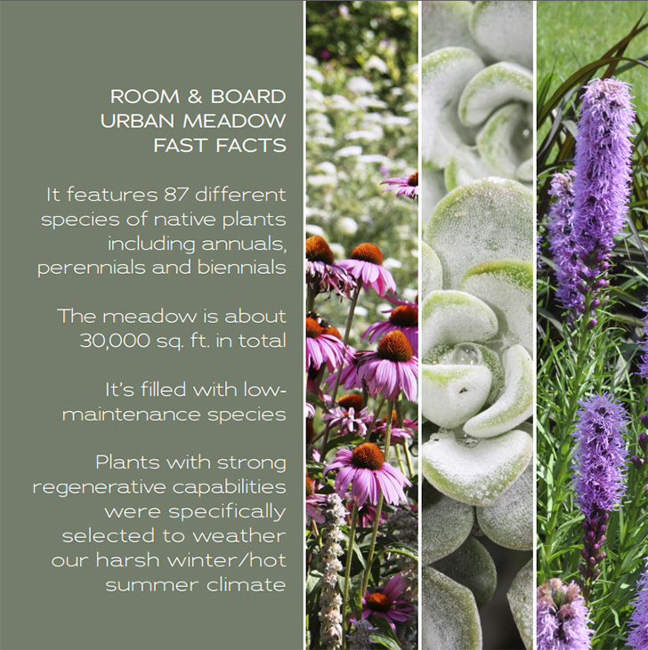 Room & Board Urban Meadow Fast Facts