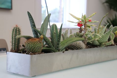 container gardening with succulents from Tonkadale Gardens
